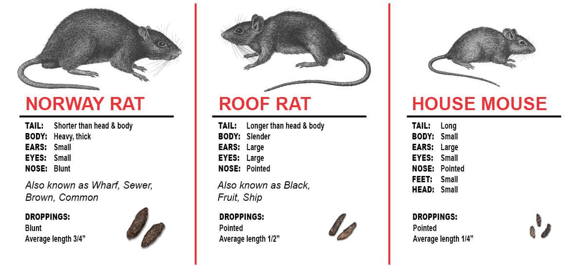 Florida Rodent Control